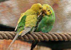 Choisir un oiseau comme animal de compagnie.